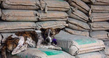 Selamatkan Anjing Kucing Bali dari Rabies