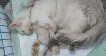 [URGENT] Bantu kucing elene bertahan hidup