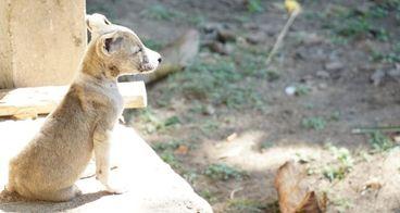 Selamatkan Anjing Kucing Bali dari Penelantaran