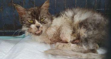 Peduli Kucing Liar Korban Buangan Manusia