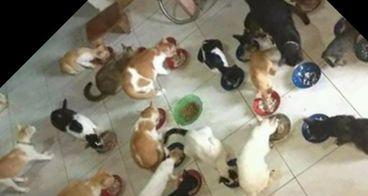 Bantu kakak Vina merawat kucing nya 42 ekor