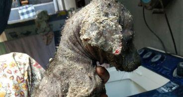Bantu Kami Beri Makan Anjing Terlantar