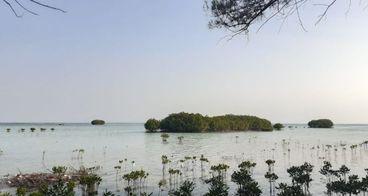 1000 Mangroves untuk Pulau 1000