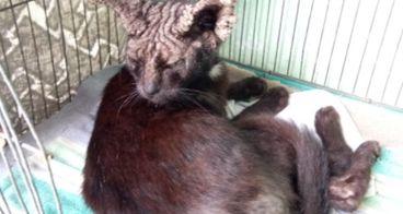 Bantu kedilovers membayar tagihan klinik