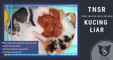 TNSR (Trap-Neuter/Spay-Return) untuk Kucing Stray