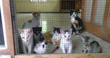 Bantu dana u lahan bagi kucing