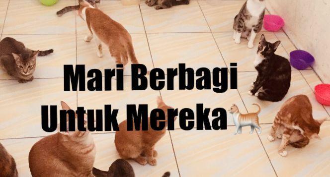 Donasi Untuk Kucing Jalanan #pedulikucing
