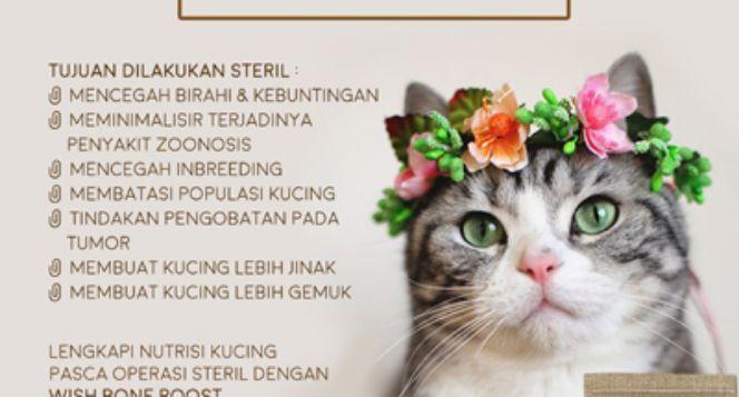 Steril kucing untuk mengurangi populasi